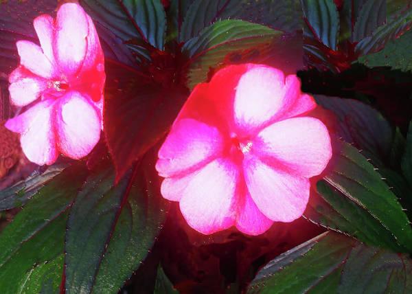 Pink Red Glow Art Print