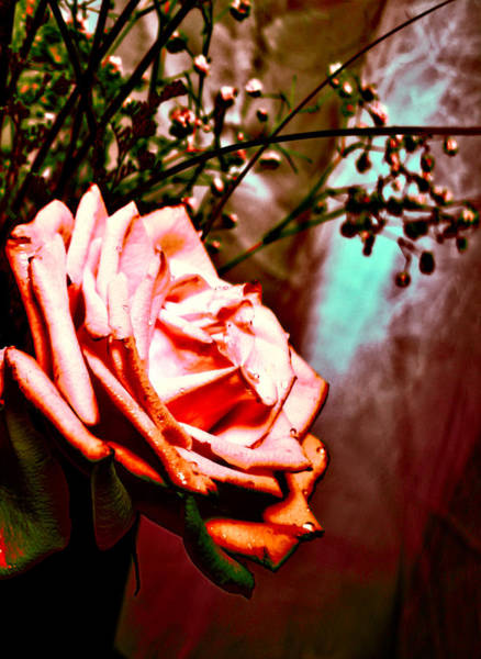 Wall Art - Pyrography - Pink Rose 1 by Leyla Munteanu