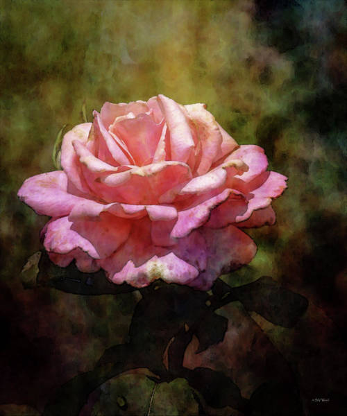 Photograph - Pink Rose 1721 Idp_2 by Steven Ward