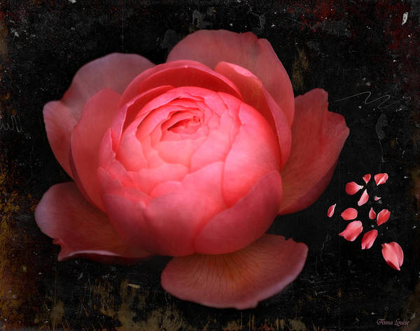 Photograph - Pink Rose by Anna Louise