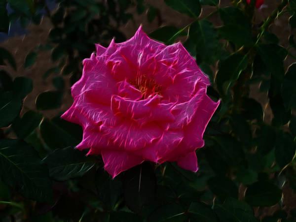 Digital Art - Pink Rose Electric by Chris Flees