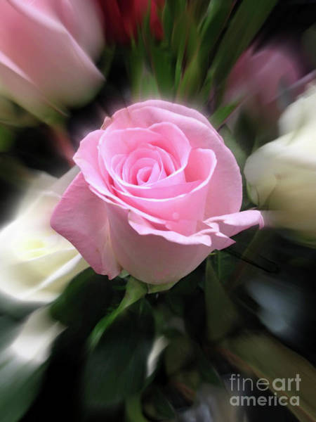 Grosse Pointe Farms Photograph - Pink Rose  by Ellen Stanton
