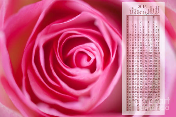 Wall Art - Photograph - Pink Rose Flower Petals Calendar2016 by Arletta Cwalina