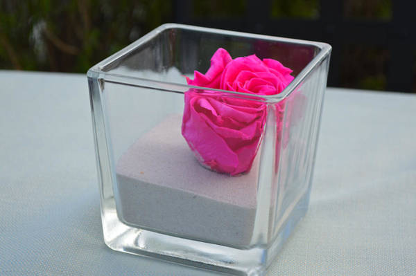Photograph - Pink Rose In Venice by Chris Alberding