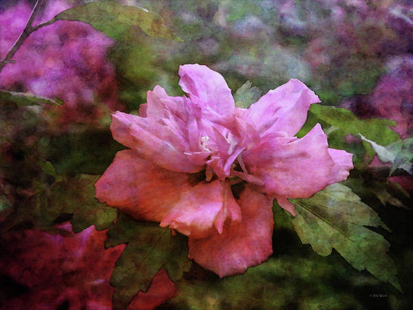 Photograph - Pink Rose Of Sharon 3395 Idp_2 by Steven Ward