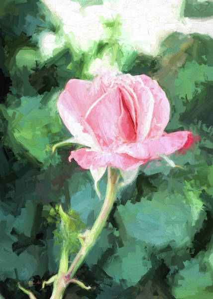 Photograph - Pink Rose by OLena Art - Lena Owens