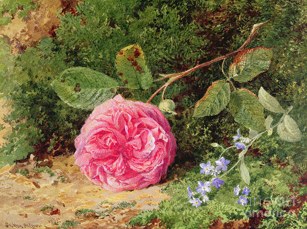 Wild Flowers Drawing - Pink Rose On A Mossy Bank by Henry Sutton Palmer