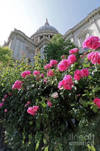Photograph - Pink Roses At St Pauls Cathedral London by Julia Gavin