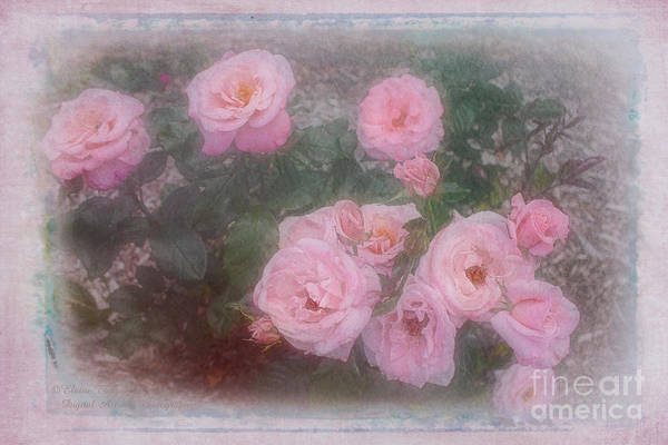 Photograph - Pink Roses by Elaine Teague