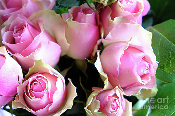 Photograph - Pink Roses by Marina Usmanskaya