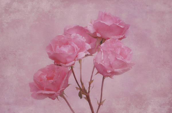 Photograph - Pink Roses by Sandy Keeton