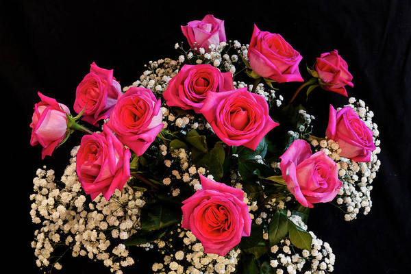 Photograph - Pink Roses With All My Love by James BO Insogna