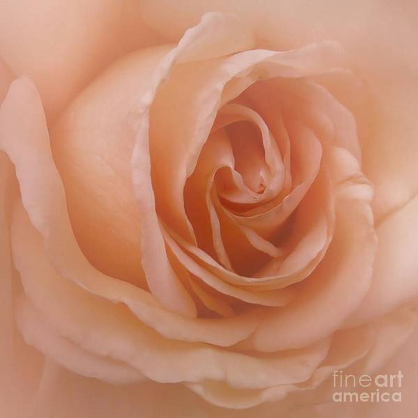 Photograph - Pink Satin Rose by Patricia Strand