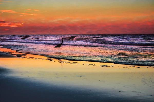 Photograph - Pink Sky And Heron In The Surf by Michael Thomas