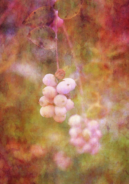 Photograph - Pink Snow Berries 5189 Idp_2 by Steven Ward