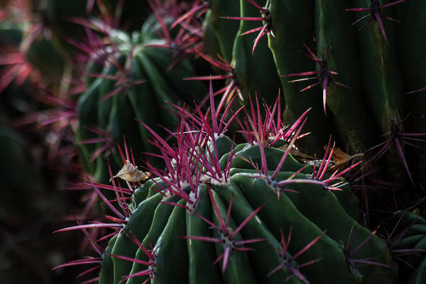 Wall Art - Photograph - Pink Spikes by Ruth Jolly
