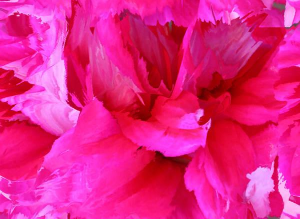 Photograph - Pink Splash by Kristin Elmquist