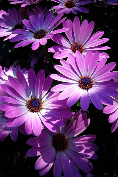 Blume Photograph - Pink Summer by Juergen Weiss