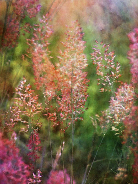 Photograph - Pink Tails 4242 Idp_2 by Steven Ward