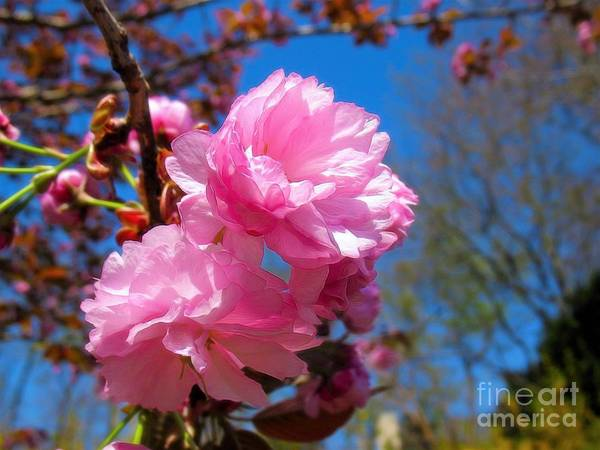 Photograph - Pink Together by Patti Whitten