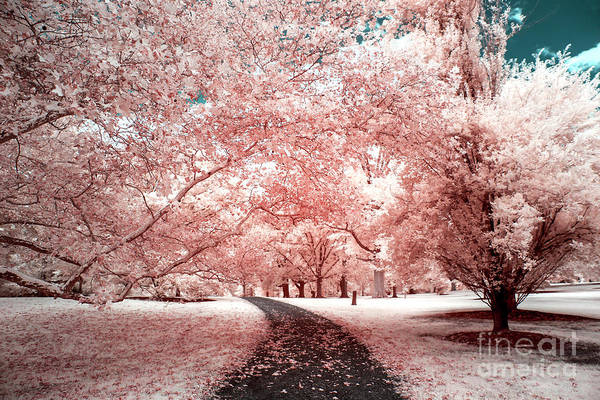 Somerset County Photograph - Pink Trees Infrared by John Rizzuto