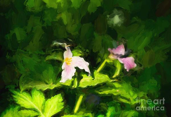 Photograph - Pink Trillium Flower by Les Palenik