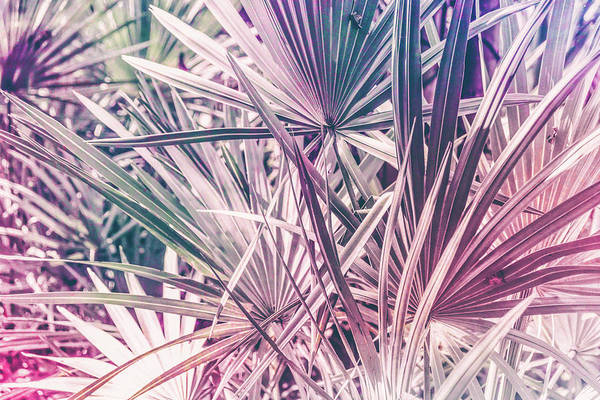 Photograph - Pink Tropical Leaves by Andrea Anderegg