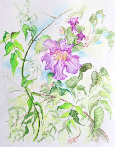 Yellow Trumpet Mixed Media - Pink Trumpet Vine by Bonnie See