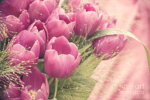 Cut Flowers Wall Art - Photograph - Pink Tulips by Delphimages Photo Creations