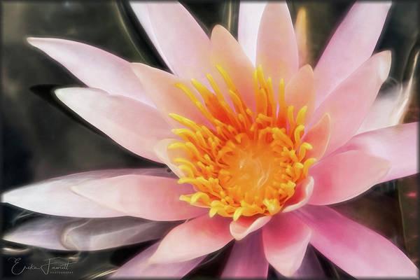 Photograph - Pink Waterlily by Erika Fawcett