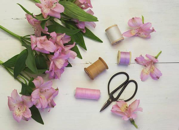 Alstroemeria Photograph - Pink Whispers by Kim Hojnacki