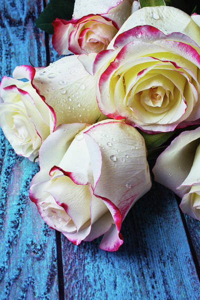 Wet Rose Wall Art - Photograph - Pink White Roses On Blue Boards by Garry Gay