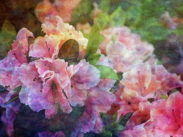 Pink With White Frills 1503 Idp_3 Art Print