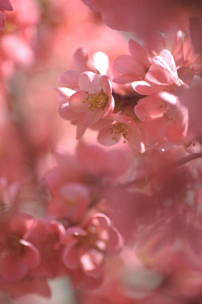 Photograph - Pink Worlds by Jenny Rainbow