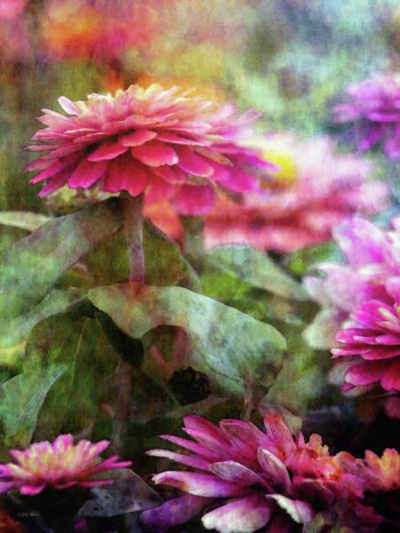 Photograph - Pink Zinnia 1300 Idp_2 by Steven Ward
