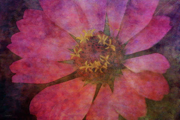 Photograph - Pink Zinnia 2397 Idp_2 by Steven Ward