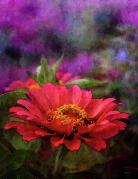 Photograph - Pink Zinnia 3036 Idp_2 by Steven Ward