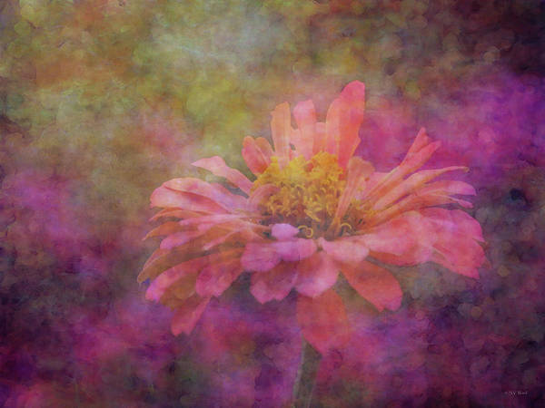 Photograph - Pink Zinnia In The Ethereal Plain 3038 Idp_2 by Steven Ward