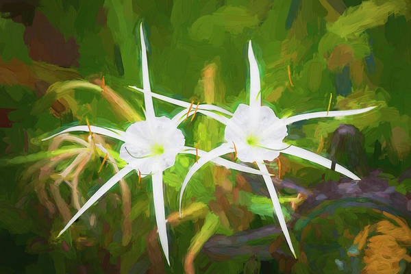 Spider Lily Wall Art - Photograph - Spider Lily Beauty  by Rich Franco