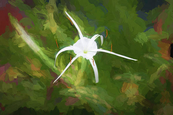 Spider Lily Wall Art - Photograph - Spider Lily Beauty  001 by Rich Franco