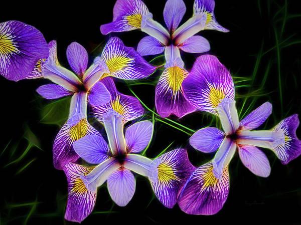 Photograph - Pinwheel Purple Iris Glow by Penny Lisowski