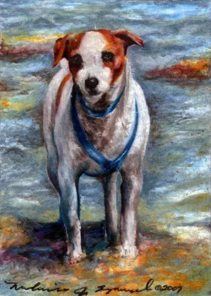 Furry Drawing - Piper On The Beach by Melissa J Szymanski