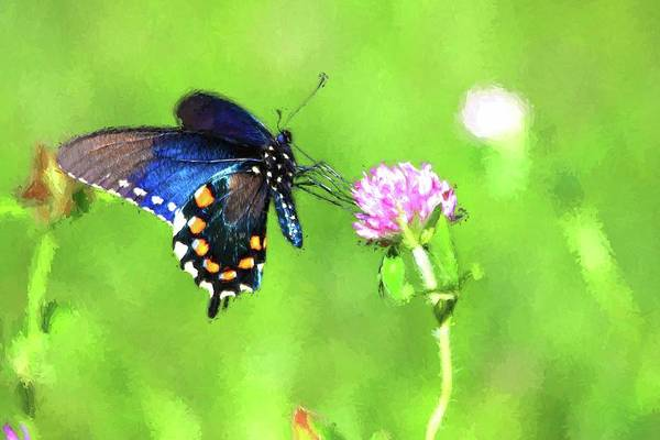 Photograph - Pipevine Swallowtail Painting by Carol Montoya