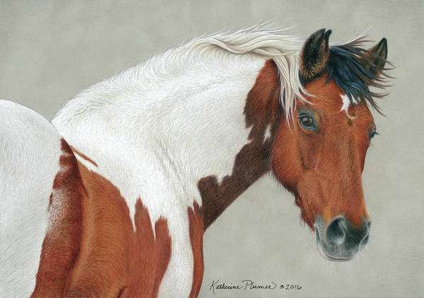 Equine Drawing - Pippin by Katherine Plumer