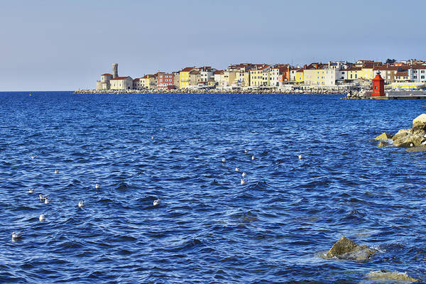 Photograph - Piran Peninsula by Ivan Slosar