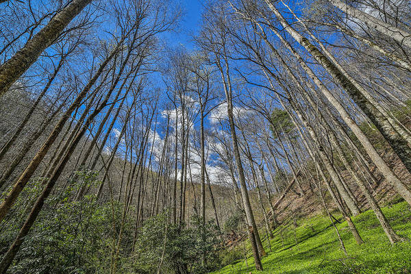 Photograph - Pisgah National Forest Blue Sky And Green Valley by Donnie Whitaker