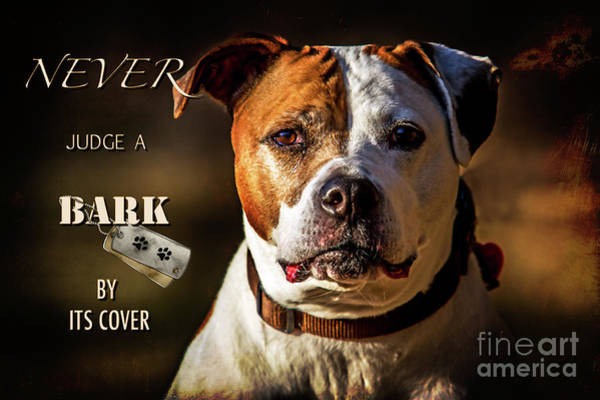 Photograph - Pitbull Rescue Poster by Eleanor Abramson