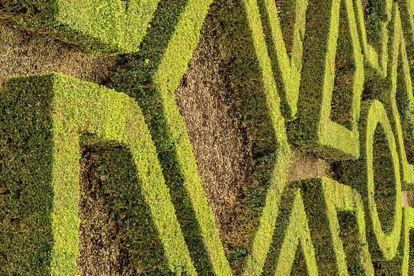 Photograph -  Pitti Palace Topiary by Steven Greenbaum