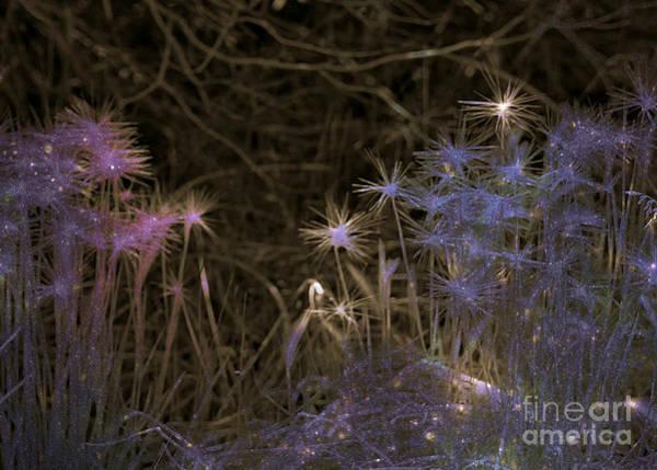 Photograph - Pixie Land by Jenny Revitz Soper