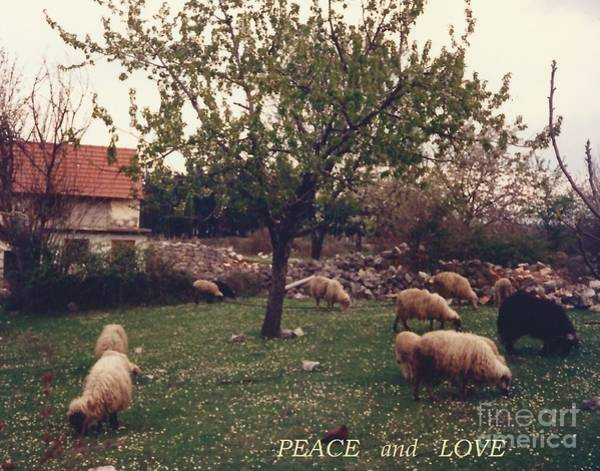 Photograph - Place Of Peace And Love by Christina Verdgeline